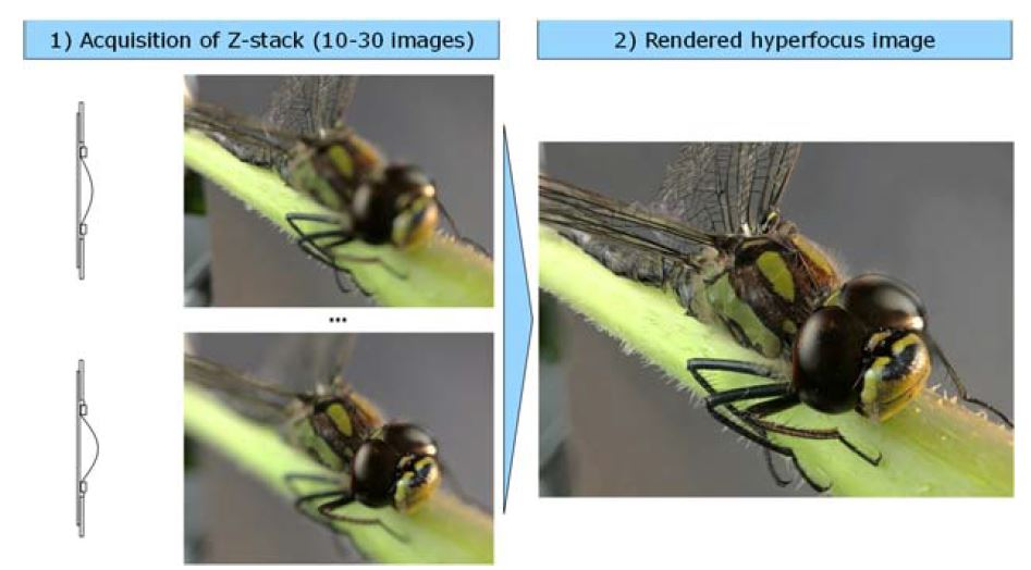 Hyperfocus image